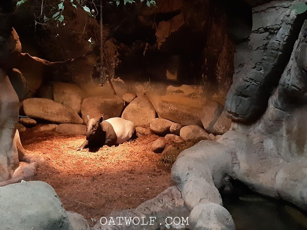 Diergaarde Blijdorp Rotterdam Zoo
